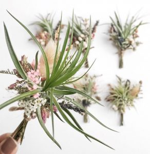 Air Plant Boutonnieres